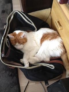 キャリーバッグの上で寝るにゃあ